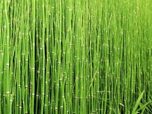 Green Fourth Chakra
