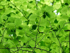 Green Heart Chakra Color